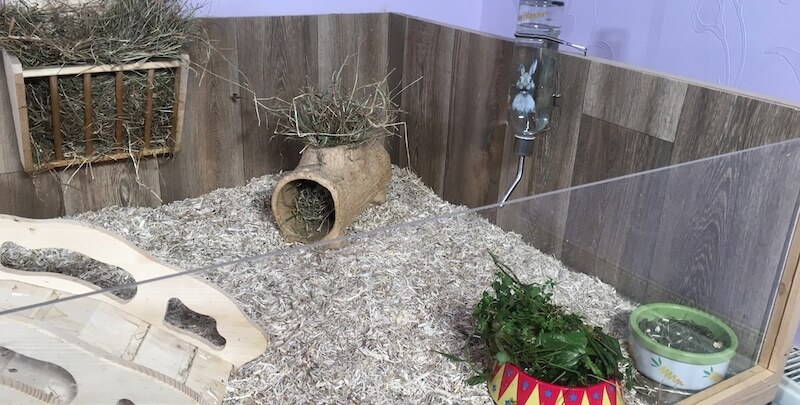 Guinea pig kitchen area with hay, fresh water, fresh green leaves and guinea pig pellets