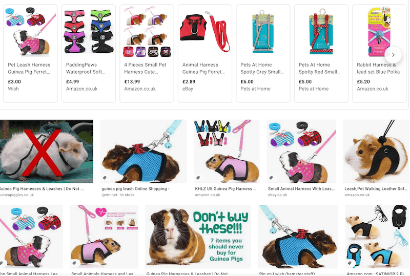 guinea pig leashes and harnesses